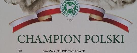 Alaskan Malamute dyplom champinat