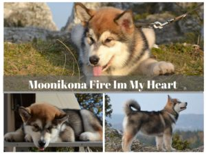 moonikona fire in my heart