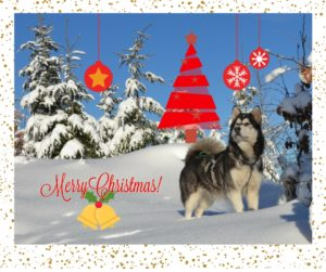Wesołych Świąta